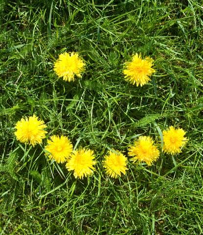 Risoterapia de primavera